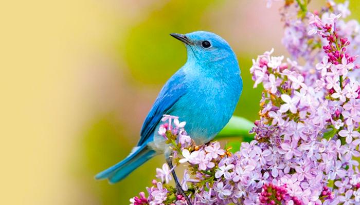 Indul a tavaszi madárles program. Tudod mit kell figyelni?