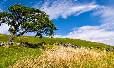A különös fa egy új korszak kezdetét jelzi