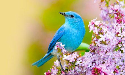 Itt a madárles program – Tudod mit kell figyelni?