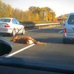 Döbbenetes! Egy óriási szarvas törte össze autóját az autópályán