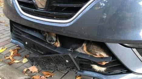 Lökhárítóba szorult a kutyával autózta át a fél országot a sofőr