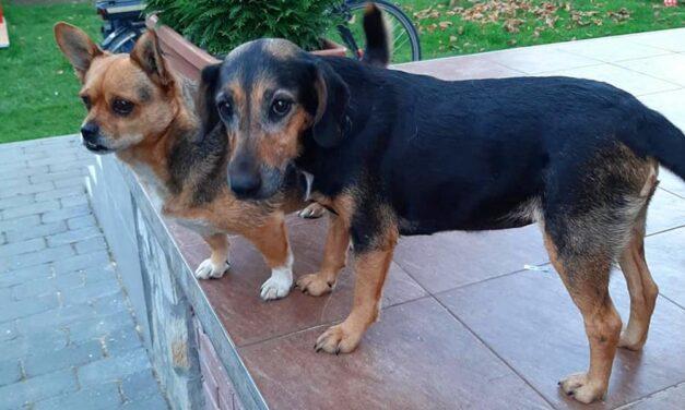 Gazdára talált a lökhárítóba szorult kutya
