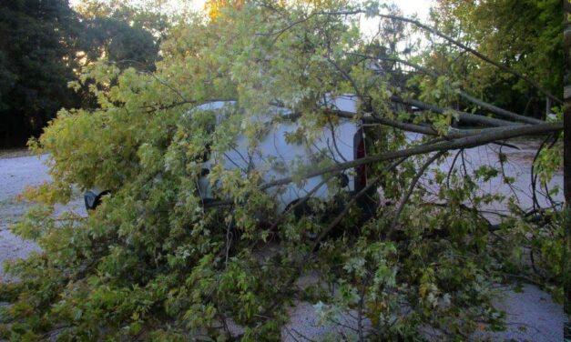 Szélvihar: rádőlt egy fa egy mozgó autóra – meghalt a sofőr