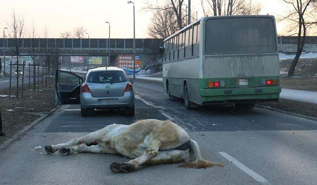 Elütöttek egy lovat, félpályás útlezárás van a helyszínen