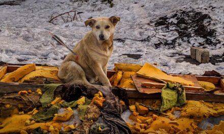 Állatkínzás: nyíllal lőttek át két kutyát