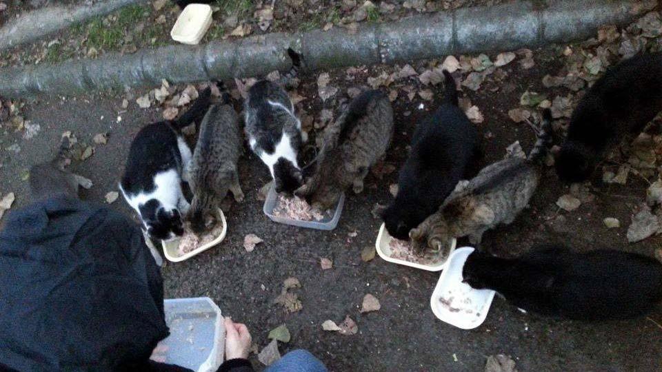 200 ezret is fizethet az, aki kóbor állatot etet