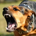 Idős férfire támadt két agresszív kutya – az áldozat életveszélyesen megsérült