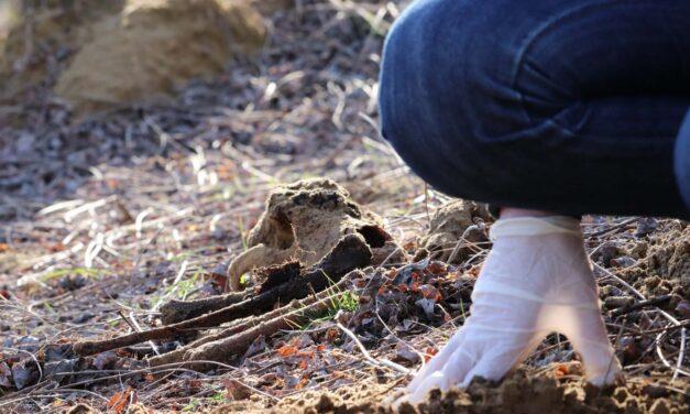 Sokkoló! Kutyatetemekkel teli tömegsírt találtak