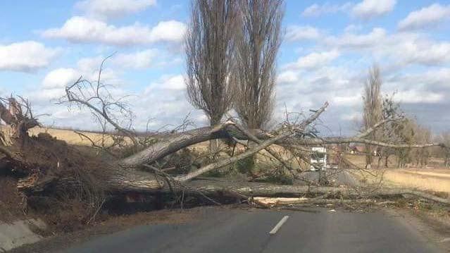 Fákat csavar ki, tetőket tépett le a vihar Győrben