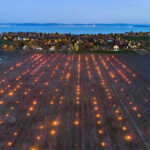Ilyet még nem láttál! Sok száz fáklyával védik a barackfákat a fagytól a Balatonnál