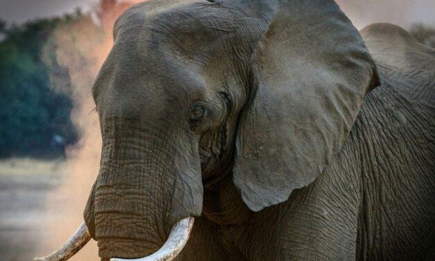 Megszólalt a Szadán elpusztult állatok gazdája, René Casselly