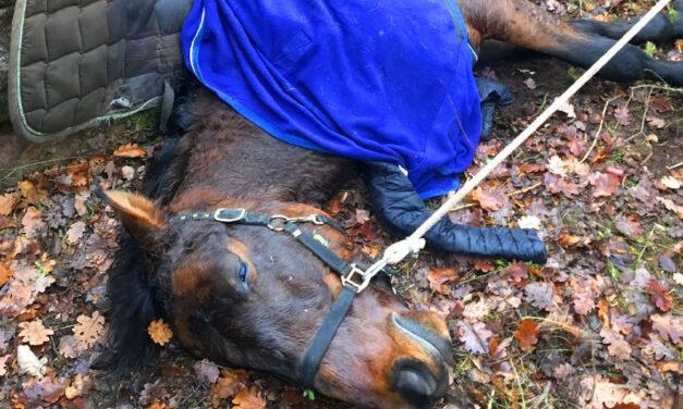 Elpusztult a kutyáktól megrémült, szakadékba zuhant ló, a lovas éppen csak megúszta a balesetet